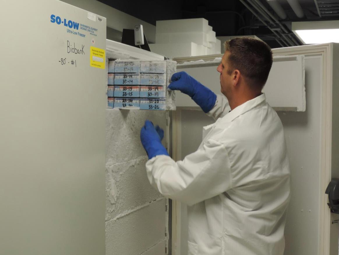 Researcher looks at samples in cold-storage biobank.